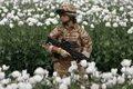 Под присмотром немецких «зольдатен»… Таджикистан превратился в перевалочную базу для афганского наркортрафика