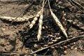Жаркое лето 2012… 600 000 гектаров посевов пшеницы в Казахстане спишут из-за засухи