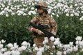 Во имя демократии… С начала операции НАТО «Несокрушимая свобода» от афганского героина погибло более миллиона человек, а его производство выросло в 40 раз