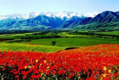 Киргизия в глобальном мире... Может ли республика стать региональной Швейцарией?
