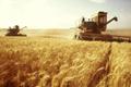 Экспорт российского зерна: Не было бы счастья, да Украина помогла